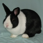 List of rabbit breeds