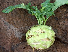 can rabbits eat kohlrabi